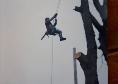 Abattage d'arbre en cours - Abattage d'Arbres Expert (Émondeur Lanaudière)