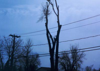 Élagage arbre Lanaudière - Abattage arbre Expert (émondeur Lanaudière)
