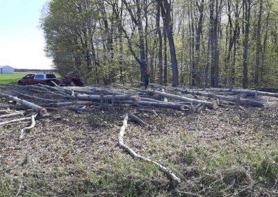 Service abattage arbre et coupe arbre a Joliette, Lanaudiere- Service Arbres Expert